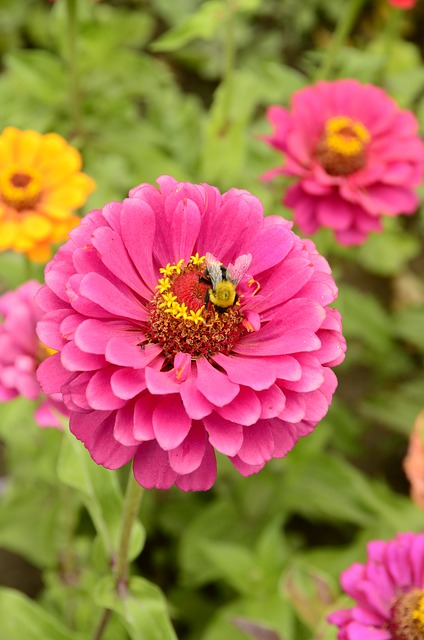 Free flower pink bee nature wasp macro blossom