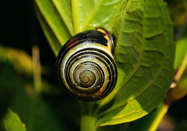 Free snail foraging close shell slowly nature journal