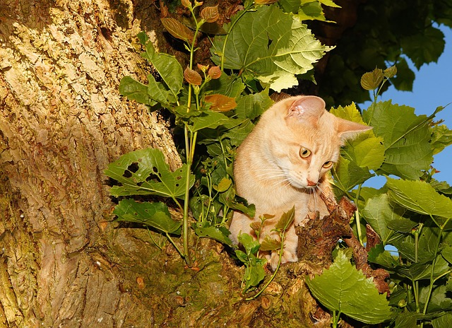 Free cat female head climb tree catching birds cheeky