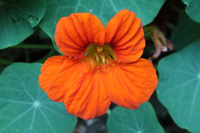 Free flower orange flower nature plant blossom