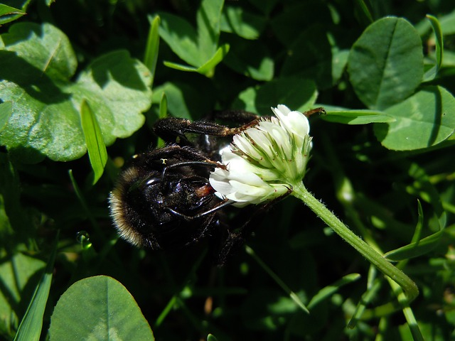 Free bee insect close