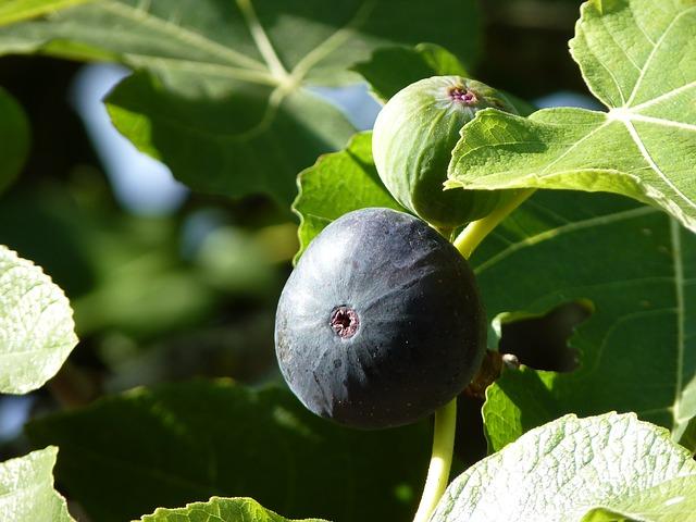 Free cowardly close fruit plant ripe