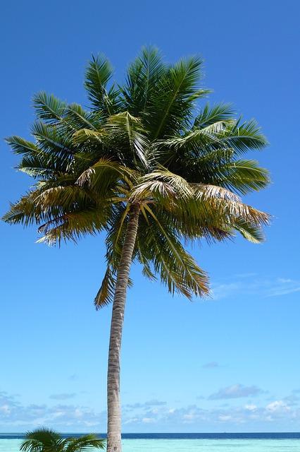 Free palm beach island exotic