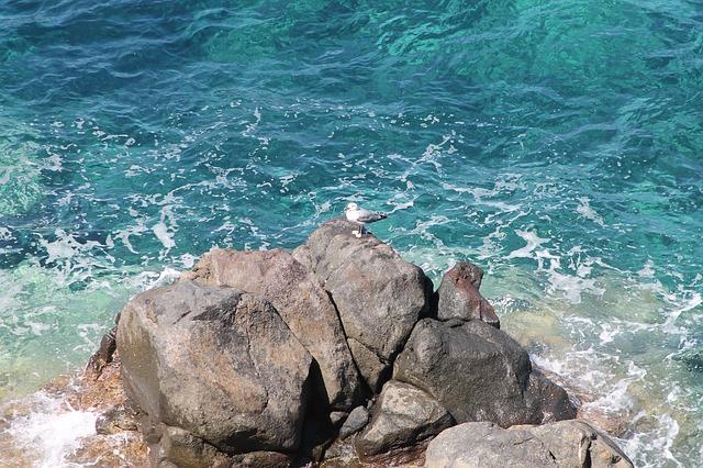 Free tuscany sea island capraia seagull scoglio