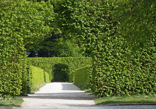 Free archway hedges green leaves rest serenity spring