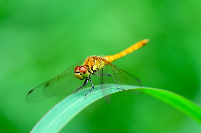 Free dragonfly insects summer fresh medium free wing