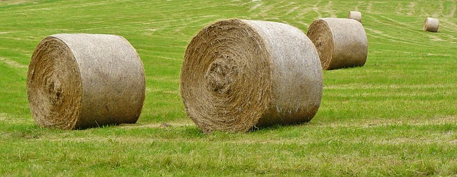 Free straw bales harvest field hay agriculture meadow