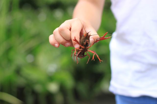 Free crayfish summer japan