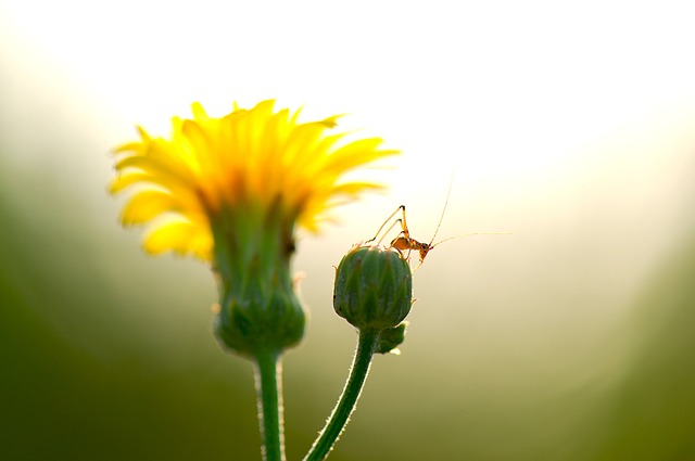 Free Photos: Summer flowers insects cub i am happy to harmony | sungho kim