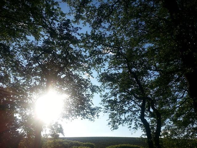 Free nature tree landscape sun evening light