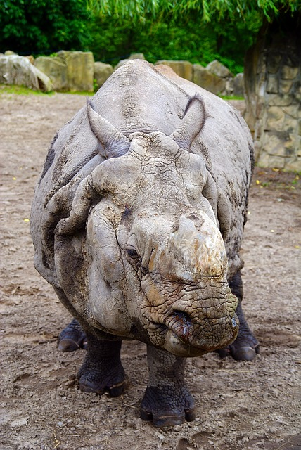 Free rhino fauna the nature of the animal