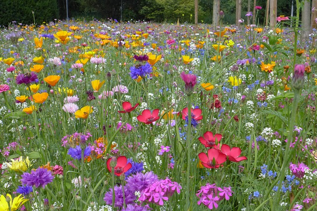 Free flower meadow summer summer flowers red yellow