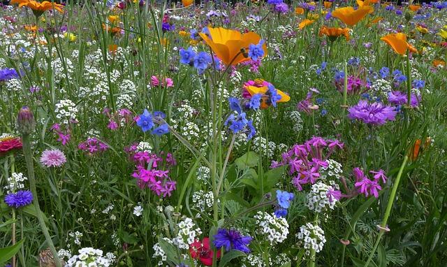 Free flower meadow farbenpracht flowers yellow blue
