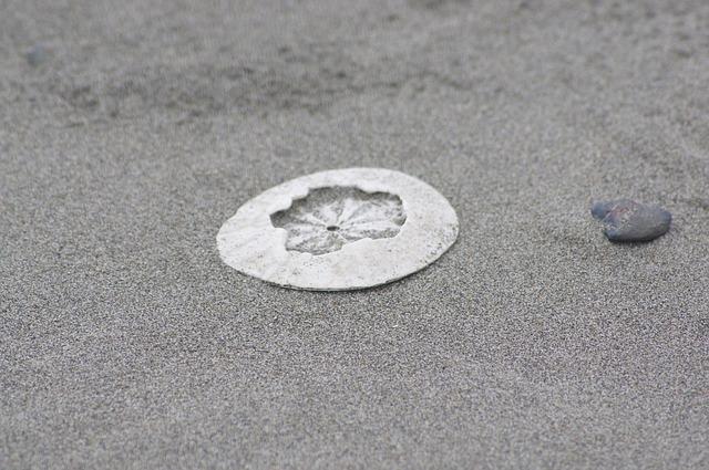 Free sanddollar clypeasteroida beach sand sandy shade