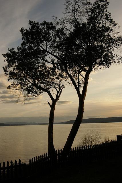 Free nature tree sunset beautiful reflections sky