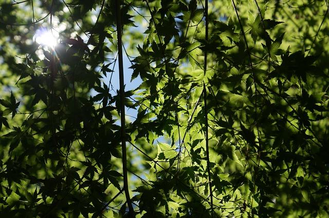 Free trees leaves forest sunbeam sunlight sunbeams