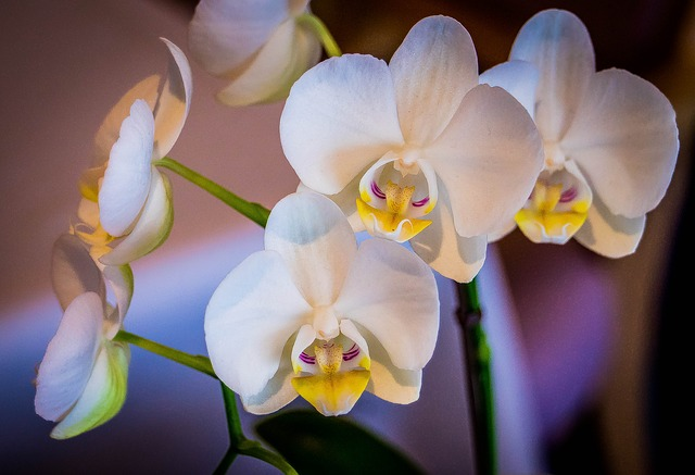 Free orchid white flower tropical botanical yellow
