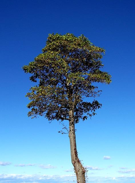 Free tree nature tall alone