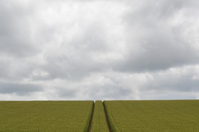 Free field wheat campaign grey sky grey sky green