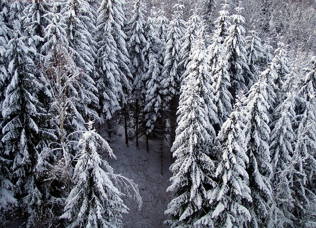 Free fir winter snow tree snowy
