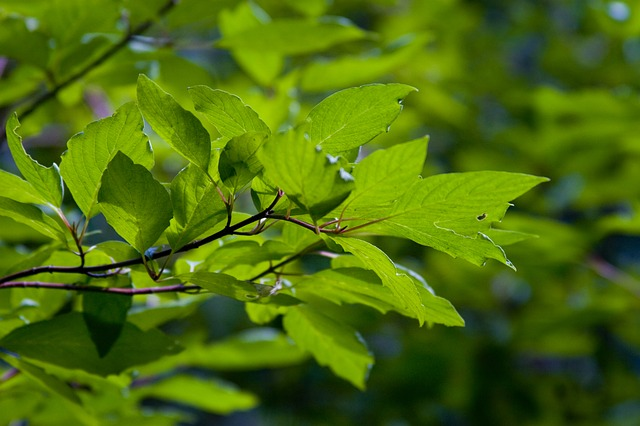 Free leaves leaf green nature colorful plant summer