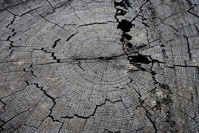 Free tree stump wood old nature texture timber rural