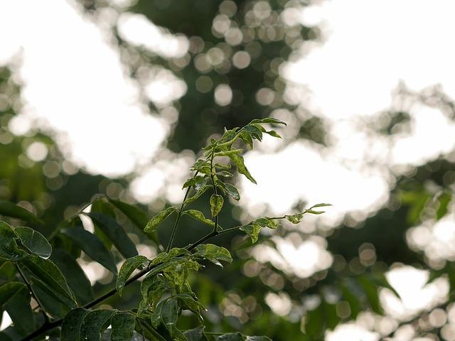 Free bokeh leaves green plant leaf shine glistering