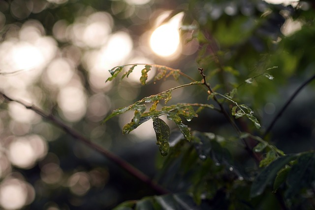 Free nature leaves green bokeh plant leaf shine