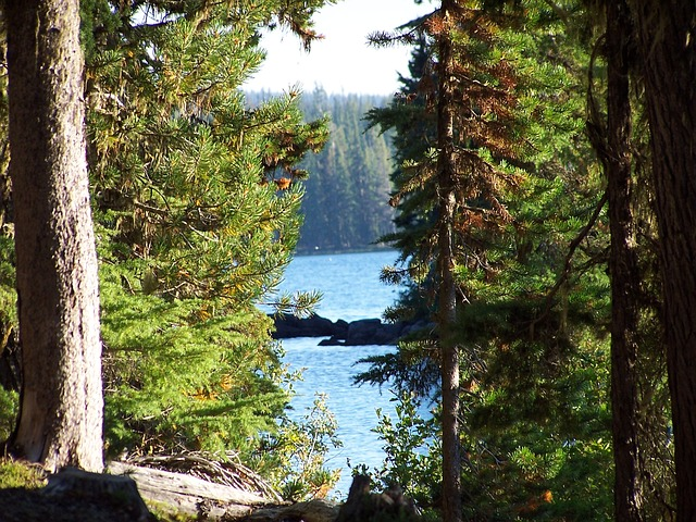 Free waldo lake lake trees beauty nature peaceful calm