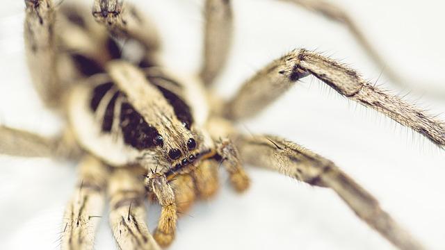 Free spider garden brazil macro nature
