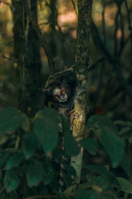 Free monkey brazil small jungle tree america climb
