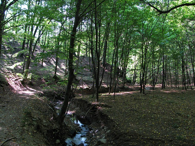Free forest wood trees brook ecology environment