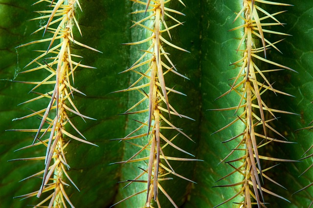 Free cactus spur thorns green prickly plant