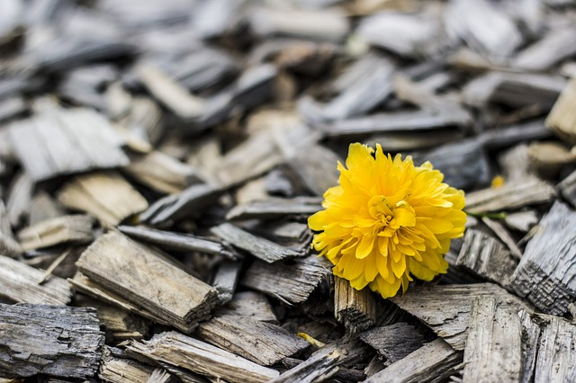Free                yellow flower wood
