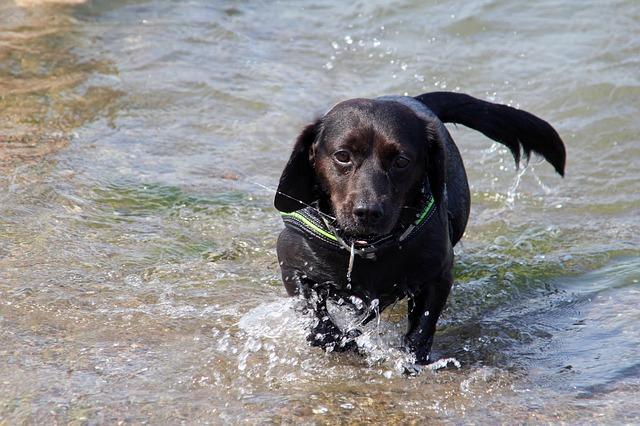 Free dog hybrid black water sea baltic sea beach