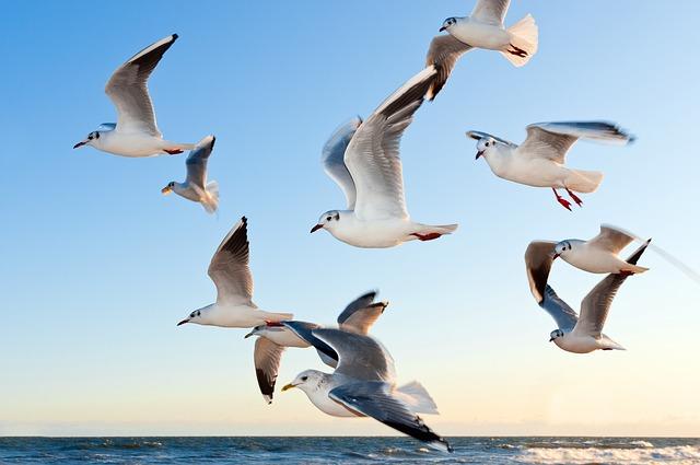 Free               gulls bird fly coast sunset sea mood sky water