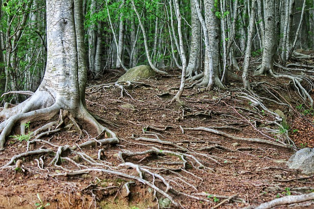 Free nature roots trees