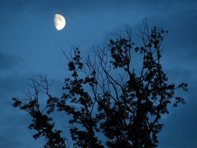 Free moon moon shine moon light tree trees dark branch