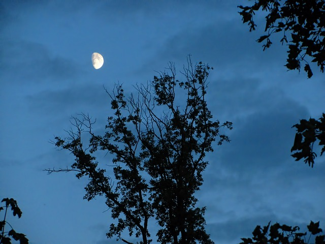 Free moon moon shine moon light trees branches dark
