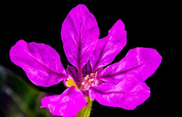 Free Photos: Flower purple macro violet | Josch13