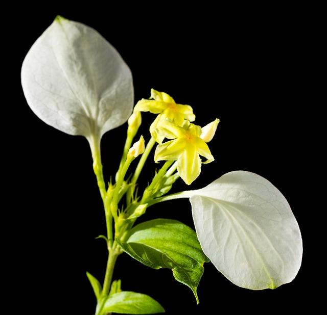 Free flower yellow white close