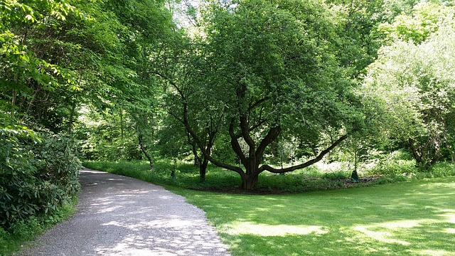 Free tree trees nature branches tall green path