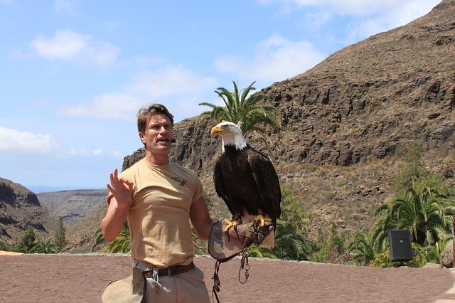 Free eagle bird beak wild