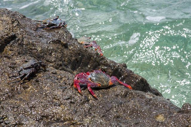 Free crabs ocean beach water