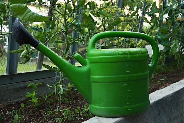 Free aspergillum a kettle greenhouse watering tomatoes