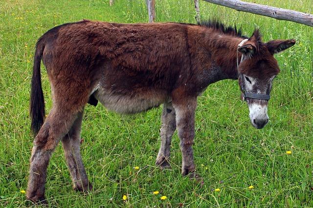 Free donkey animal beast of burden meadow pasture pets
