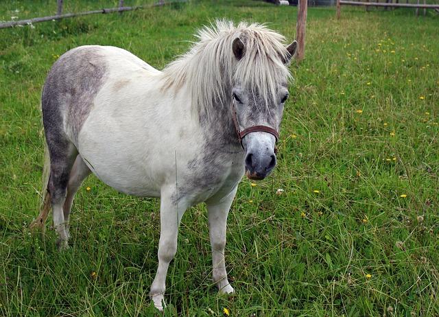 Free pony horse animal ride pasture white pets
