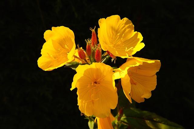 Free flower flowers yellow bright close plant garden