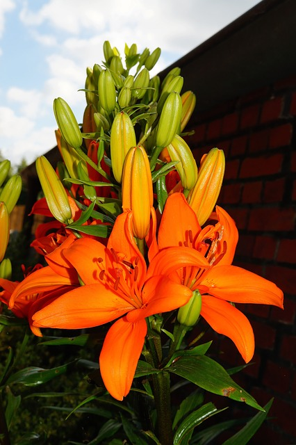 Free flower flowers orange bright pistil filigree