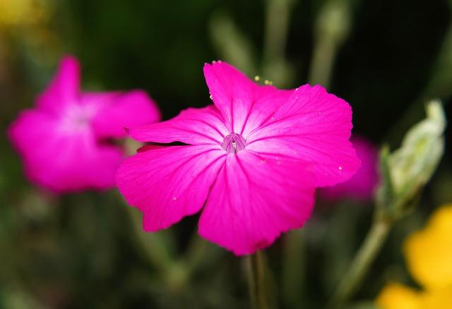 Free flower purple garden tender close blossom